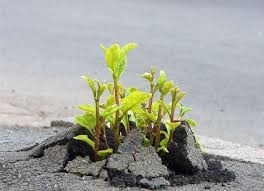 plants growing out of broken concrete