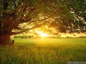 summer day under a tree