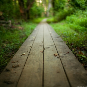 a plank path toward home