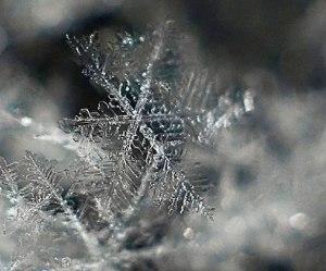 close of snowflake