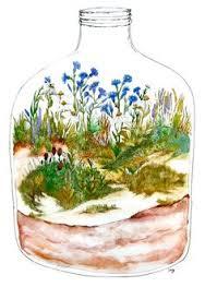 illustrated terrarium